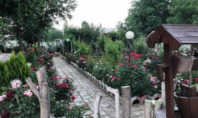 باغ عروس آزالیا در بوکان