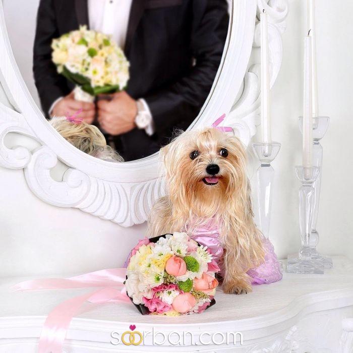 آتلیه روهان | عکاسی و فیلمبرداری عروسی