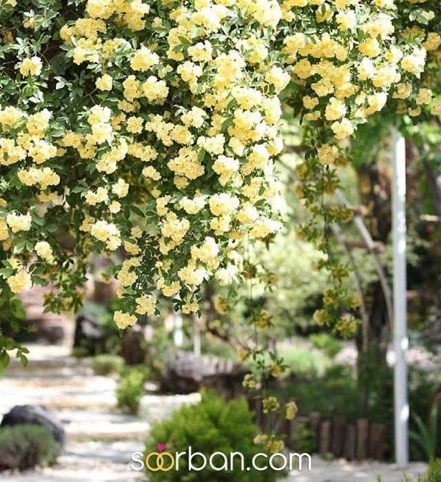 باغ عروس پیمان کرج1