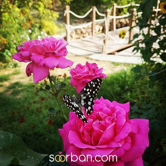 باغ عمارت آینه بوشهر2