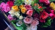 عکس گل رز 2022 | عکس گل رز قرمز برای پروفایل
